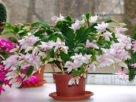 Какие цветы должны быть в каждом доме?