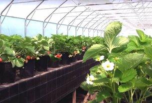 Как оснастить теплицу для выращивания овощей в зимнее время года