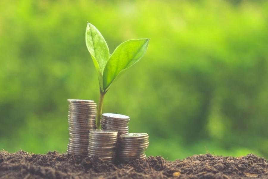 В Беларуси запустили «зеленые» кредиты. Выясняем, что это такое